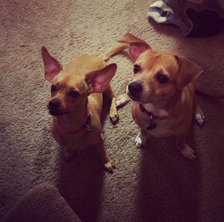 Jessica Clayton's Puppies.jpg