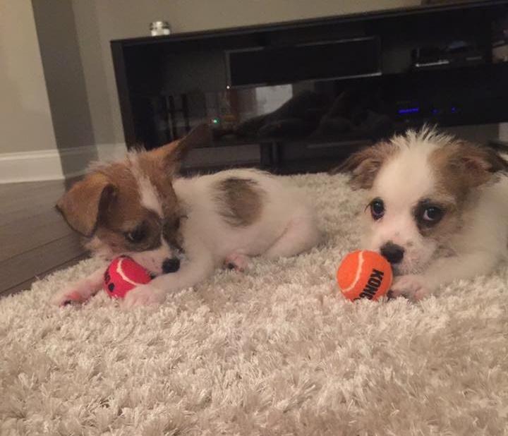 VIP Pet Rescue Fosters-258241-edited.jpg